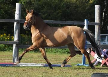 Востребованный тип вятской лошади