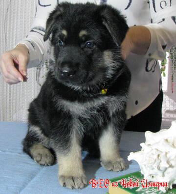 http://forumupload.ru/uploads/0008/dd/c8/376/t98311.jpg