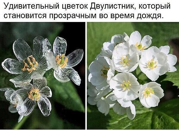http://forumupload.ru/uploads/0009/61/87/1290/427860.jpg