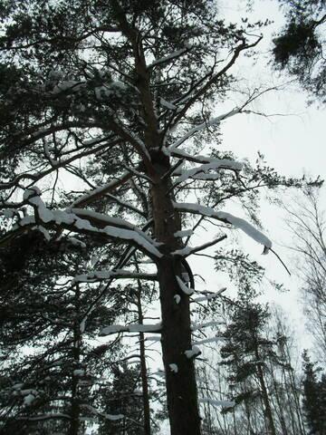 http://forumupload.ru/uploads/000a/3f/42/16/t479588.jpg