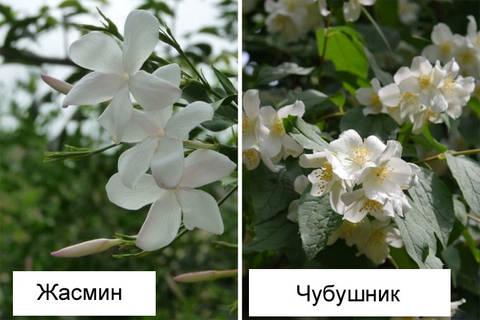 http://forumupload.ru/uploads/000a/3f/42/16/t696785.jpg