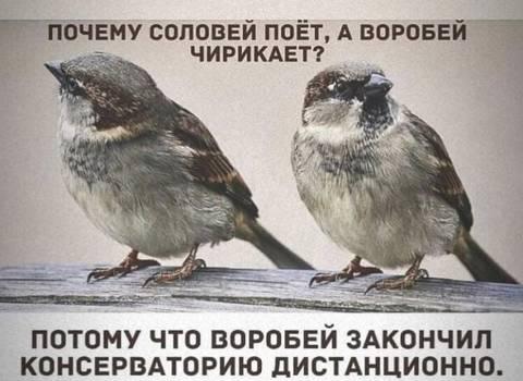 http://forumupload.ru/uploads/000a/3f/42/33/t877421.jpg