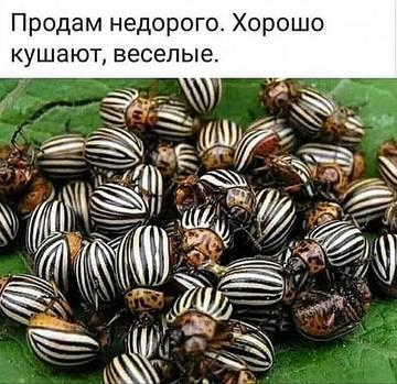 http://forumupload.ru/uploads/000a/3f/42/534/t210285.jpg
