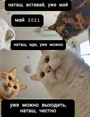 http://forumupload.ru/uploads/000a/3f/42/725/t757186.jpg