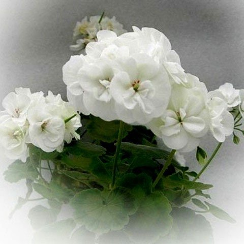 http://forumupload.ru/uploads/000e/81/4f/3/38746.jpg