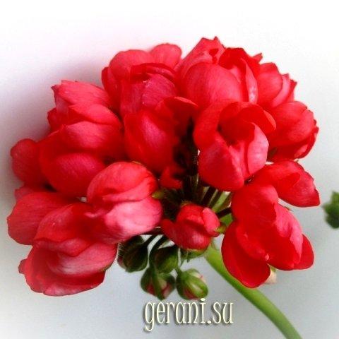 http://forumupload.ru/uploads/000e/81/4f/3/98767.jpg