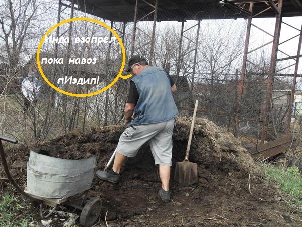 http://forumupload.ru/uploads/000f/a0/99/259/t845231.jpg