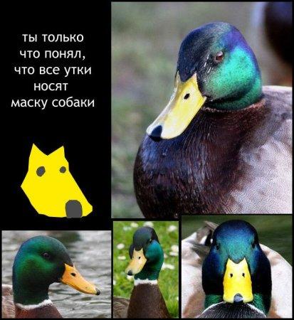 http://forumupload.ru/uploads/0010/04/81/548-3-f.jpg