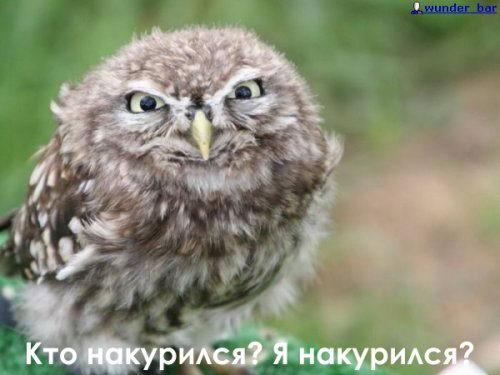 http://forumupload.ru/uploads/0010/04/81/812-3-f.jpg