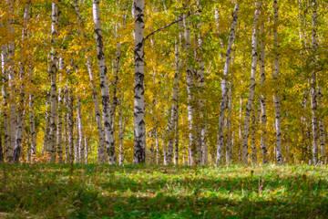 http://forumupload.ru/uploads/0010/52/00/2/t881775.jpg