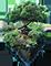 Ботаник |За пополнение справочника о растениях