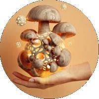 http://forumupload.ru/uploads/0012/0f/f2/961/476312.png