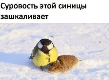 http://forumupload.ru/uploads/0012/76/8f/4/t575083.jpg