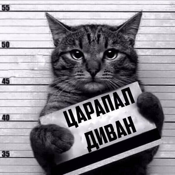 http://forumupload.ru/uploads/0013/1f/fe/411/t296449.jpg