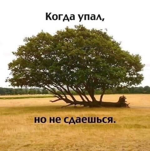 http://forumupload.ru/uploads/0013/1f/fe/411/t297261.jpg
