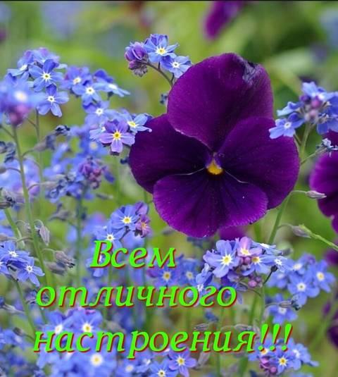http://forumupload.ru/uploads/0013/1f/fe/411/t602342.jpg