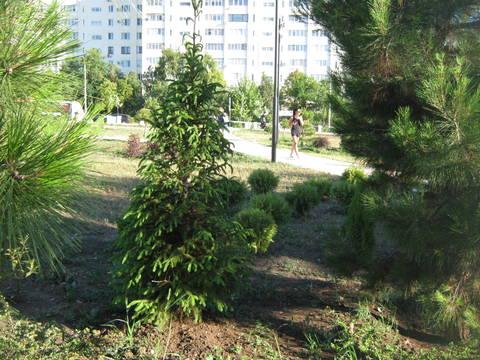 http://forumupload.ru/uploads/0013/1f/fe/411/t707323.jpg