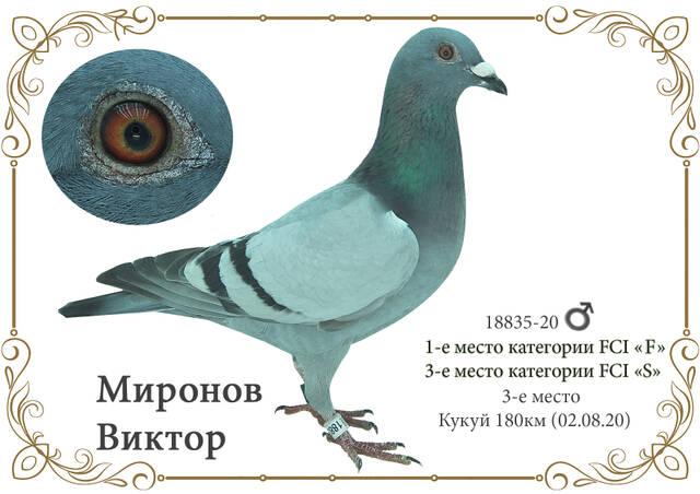http://forumupload.ru/uploads/0019/8b/76/2/850210.jpg