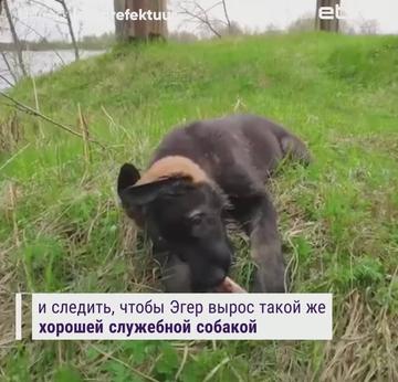 http://forumupload.ru/uploads/0019/92/bc/19/t171474.png
