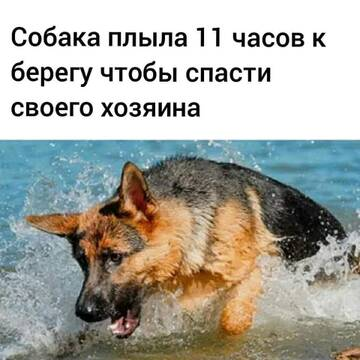 http://forumupload.ru/uploads/0019/92/bc/19/t760581.jpg