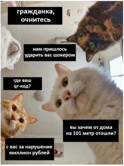http://forumupload.ru/uploads/0019/a5/88/2/87614.jpg