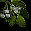 http://forumupload.ru/uploads/001a/a9/61/4/62006.png