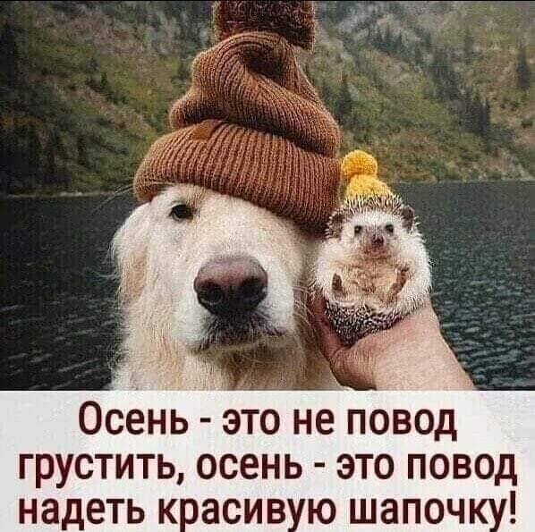 http://forumupload.ru/uploads/001a/de/56/16/316884.jpg