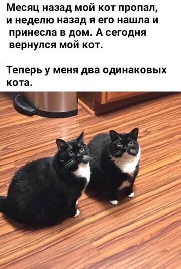 https://forumupload.ru/uploads/0000/08/fe/1069/t930761.jpg