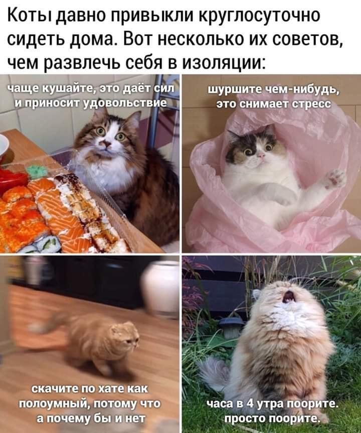 http://forumupload.ru/uploads/0000/0c/61/2725/339259.jpg