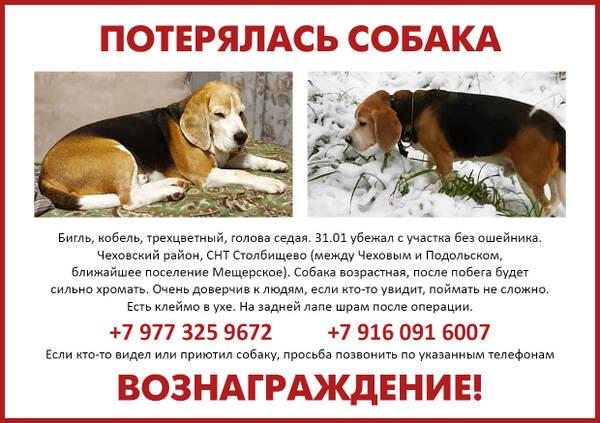 https://forumupload.ru/uploads/0000/1c/6a/1275/t683215.jpg