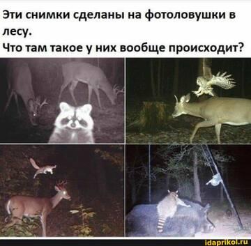 https://forumupload.ru/uploads/0001/2c/38/2/t104495.jpg