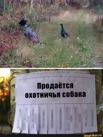 https://forumupload.ru/uploads/0001/2c/38/2/t147855.jpg