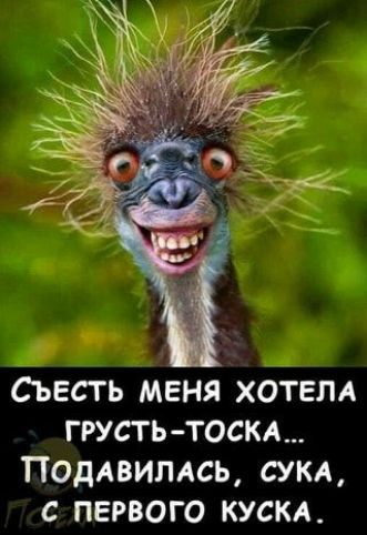 https://forumupload.ru/uploads/0001/2c/38/2/t175124.jpg