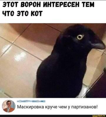 https://forumupload.ru/uploads/0001/2c/38/2/t252446.jpg