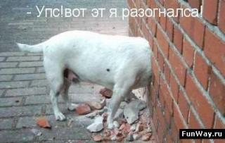 http://forumupload.ru/uploads/0002/b2/b4/6347-5.jpg