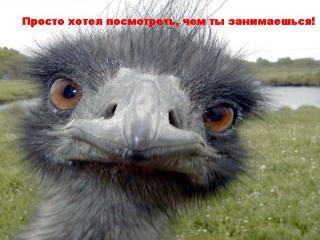 http://forumupload.ru/uploads/0002/b2/b4/6537-1.jpg