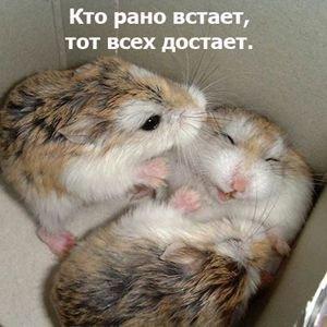 http://forumupload.ru/uploads/0002/b2/b4/6551-3-f.jpg