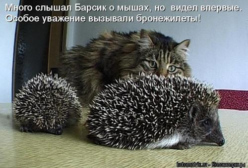 http://forumupload.ru/uploads/0004/2d/ca/3168-4-f.jpg