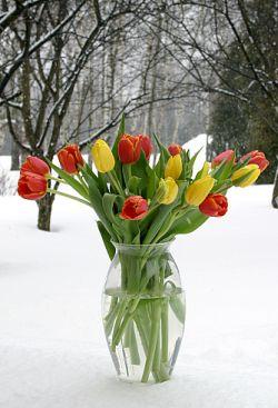 http://forumupload.ru/uploads/0004/73/53/14556-5-f.jpg