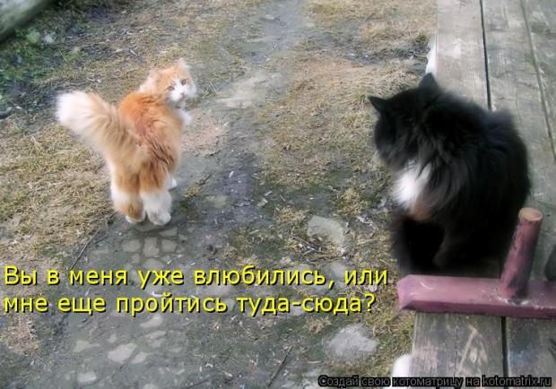 http://forumupload.ru/uploads/0004/73/53/16160-1-f.jpg
