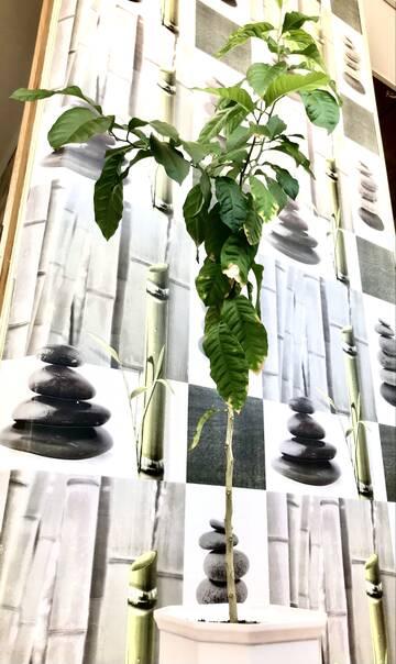 Растения: всё необычное, полезное и красивое