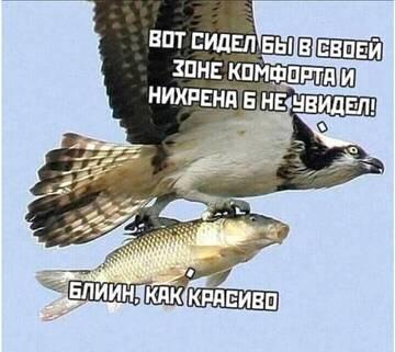 https://forumupload.ru/uploads/0006/60/18/6157/t896517.jpg