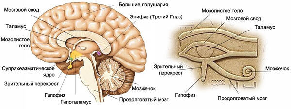 http://forumupload.ru/uploads/0009/61/87/14/t279404.jpg