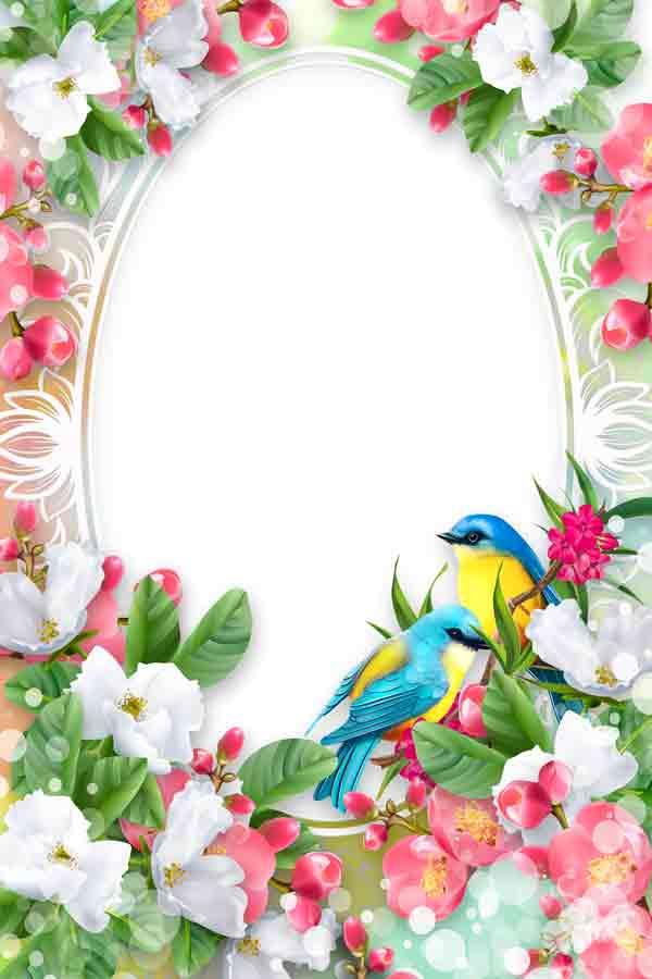 Рамка для фотографий летняя с птичками шаблон скачать