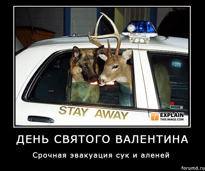 http://forumupload.ru/uploads/000d/25/1f/9-3-f.jpg