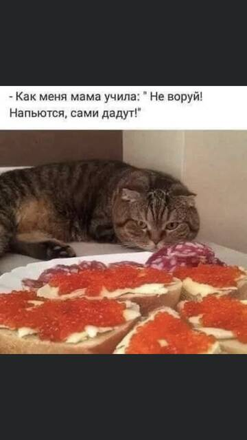 http://forumupload.ru/uploads/000d/6b/61/4550/t156954.jpg