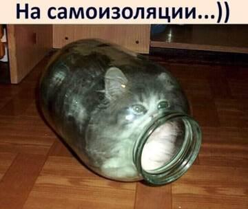 http://forumupload.ru/uploads/000d/6b/61/4550/t543150.jpg