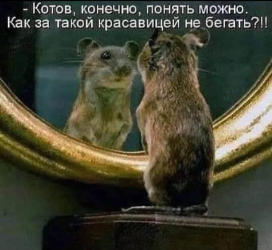 http://forumupload.ru/uploads/000d/6b/61/4555/t135226.jpg