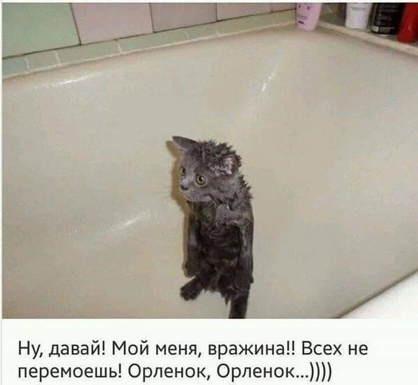 http://forumupload.ru/uploads/000d/6b/61/4555/t526841.jpg
