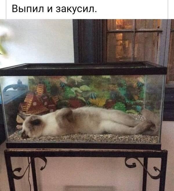 http://forumupload.ru/uploads/000d/6b/61/4555/t981745.jpg
